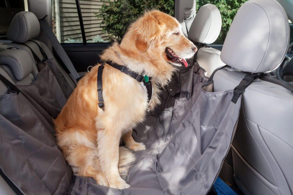 Trasporto cani in auto: cintura più pettorina con telo