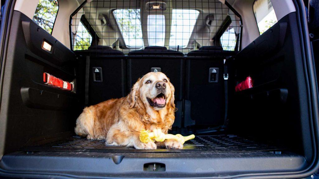 Trasporto cani in auto: rete o divisorio