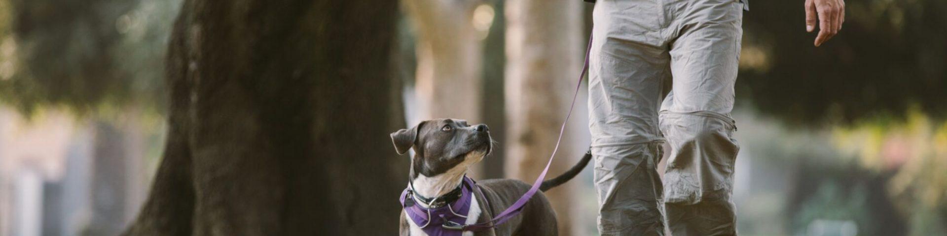 Guinzagli Mani Libere per Cani Guinzaglio per Cani a Passeggio Hands Free Le Mani del Cane Libero Guinzaglio Passeggiate e Formazione per Medium Cani Grande Arancia